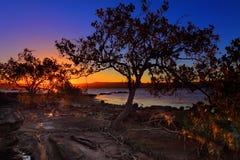 Marée basse de palétuvier de coucher du soleil et bas-fond intertidal photos stock