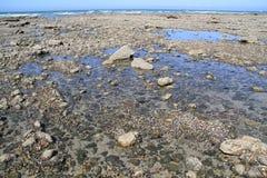 Marée basse et soleil Photo stock