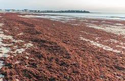 Marée rouge anormale sur Hampton Beach photographie stock