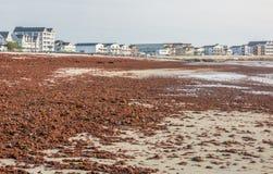 Marée rouge pendant la saison de tempête sur Hampton Beach Coast images stock