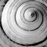 Mar abstrato Shell Imagem de Stock