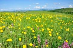 Mar amarillo de la flor Foto de archivo libre de regalías