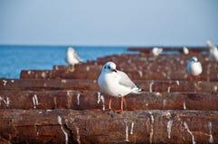 Mar & gaivotas Fotografia de Stock