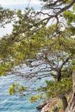 Mar azul e pinheiros verdes na costa adriático na Croácia fotografia de stock