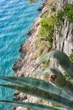 Mar azul e pinheiros verdes na costa adriático na Croácia fotos de stock
