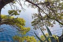 Mar azul e pinheiros verdes na costa adriático na Croácia imagem de stock