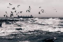 Mar Báltico no clima de tempestade Imagem de Stock Royalty Free