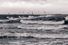 Mar Báltico no clima de tempestade Imagens de Stock