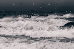 Mar Báltico no clima de tempestade Fotos de Stock Royalty Free