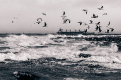 Mar Báltico no clima de tempestade Imagens de Stock Royalty Free