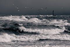 Mar Báltico no clima de tempestade Fotos de Stock