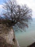Mar Báltico Un árbol Foto de archivo