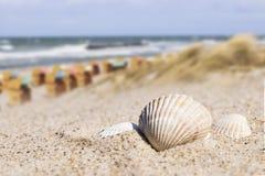 Mar Baltico delle sedie di spiaggia e della conchiglia Immagini Stock