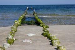 Mar Baltico diKenigsberg-Kaliningrad Fotografie Stock