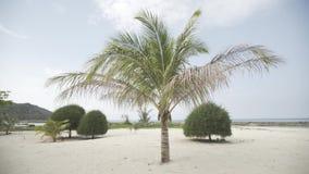 Mar branco de Ásia da lagoa da areia das horas de verão de Tailândia das palmas da praia do paraíso video estoque