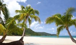 Mar, céu e palma Imagens de Stock Royalty Free