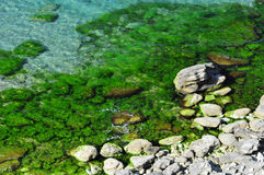 Mar colorido Fotografia de Stock Royalty Free