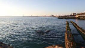 Mar com os quebra-mares no por do sol filme
