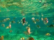 Mar completamente de peixes coloridos Imagem de Stock