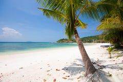 Mar con el árbol de coco Foto de archivo
