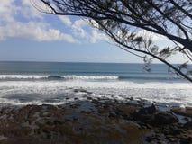 Mar con el árbol de pino Imagen de archivo libre de regalías