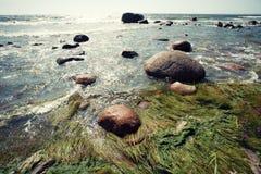 Mar con el sol, las rocas y las algas Imágenes de archivo libres de regalías