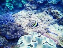 Mar coral da ilha de Okinawa do recife imagens de stock royalty free