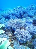 Mar coral da ilha de Okinawa do recife fotos de stock royalty free