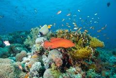 Mar coralino tropical Fotos de archivo libres de regalías