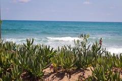 Mar Cretan selvagem do ver?o de Figdety fotos de stock