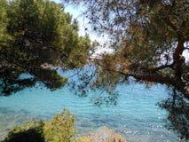 Mar da árvore Foto de Stock