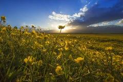 Mar da flor Imagens de Stock
