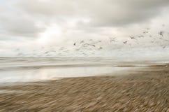 Mar da Holanda - pássaros de voo Foto de Stock