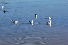 Mar da lagoa das gaivotas imagens de stock