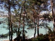 Mar da praia da floresta Fotos de Stock