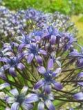 Mar das flores Fotografia de Stock Royalty Free
