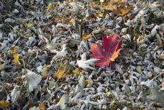Mar das folhas Imagem de Stock