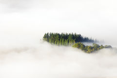 Mar de árvores circunvizinhas da névoa Fotografia de Stock Royalty Free
