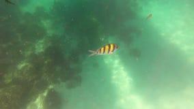 Mar de andaman subacuático con los pescados en Phuket, Tailandia metrajes
