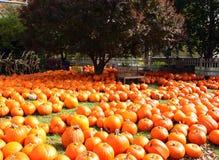 Mar de Autumn Pumpkins Imágenes de archivo libres de regalías