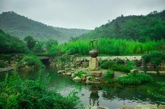 Mar de bambú hermoso Fotografía de archivo libre de regalías