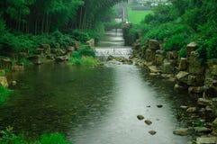 Mar de bambú hermoso Fotos de archivo libres de regalías