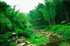 Mar de bambú hermoso Imágenes de archivo libres de regalías