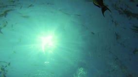 Mar de Coral Reef Fish Underwater Ocean metrajes
