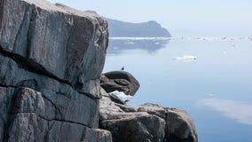 Mar de costa norte de Okhotsk fotografia de stock royalty free