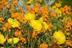 Mar de flores Imágenes de archivo libres de regalías