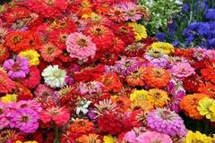 Mar de flores Imagen de archivo