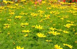 Mar de flores Imagenes de archivo