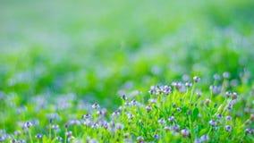 Mar de flores roxas pequenas sobre a inclinação Fotos de Stock Royalty Free