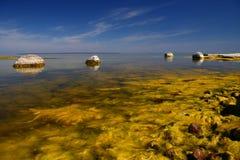 Mar de florescência Imagens de Stock